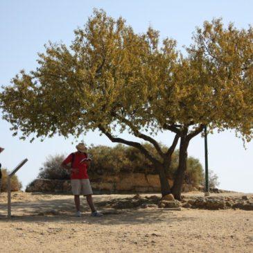 Giorno 7 – Nei dintorni di Agrigento