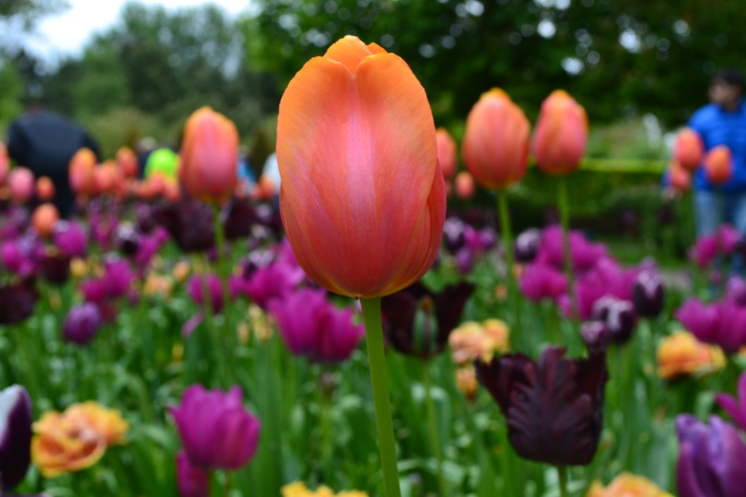 keu-olanda-fiori (3)