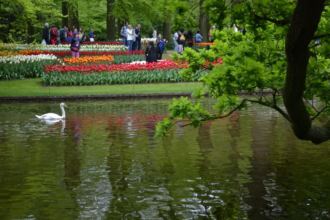 keu-olanda-fiori (4)