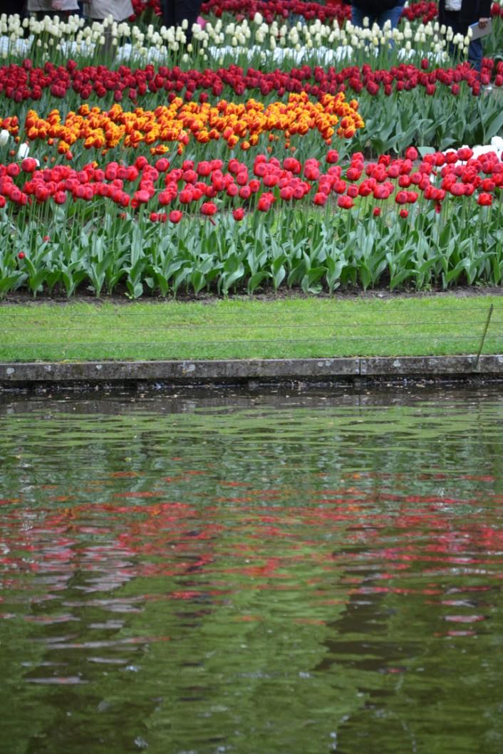 keu-olanda-fiori (6)