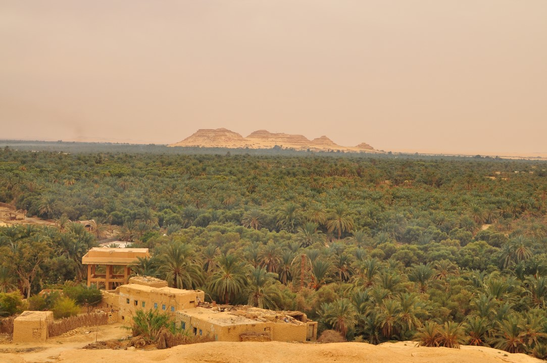 oasi-siwa-egitto-deserto (1)