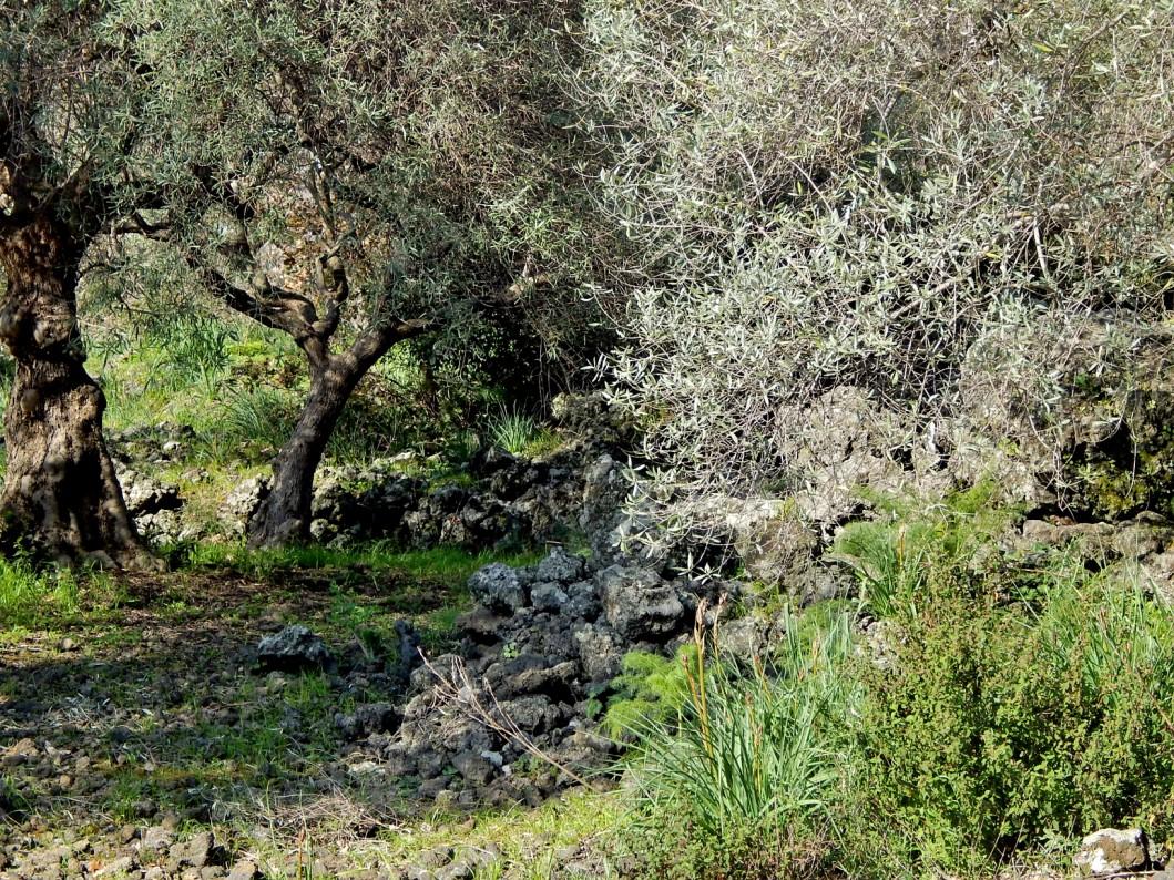 sicilyng-parchi-etna-blog-tour (3)