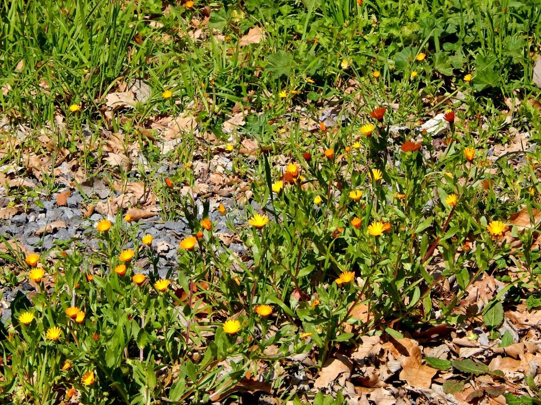 sicilyng-parchi-etna-blog-tour (9)