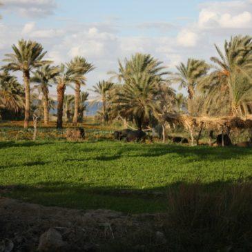 Oasi del Fayoum, giardino d'Egitto