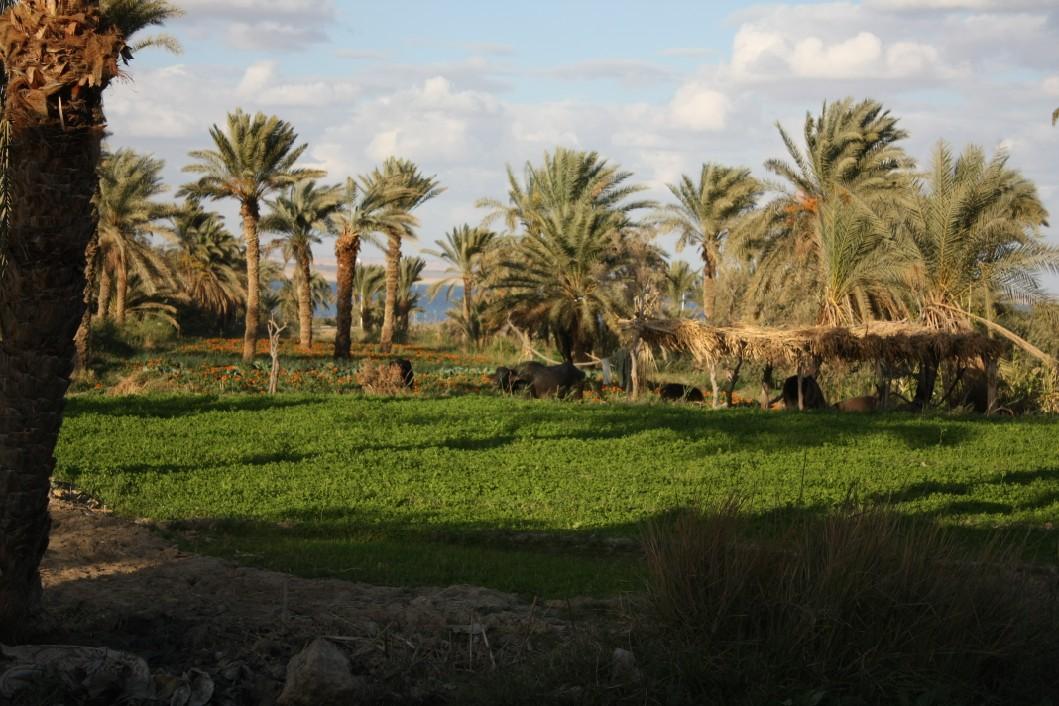 tour-oasi-fayoum-egitto-visitare (16)