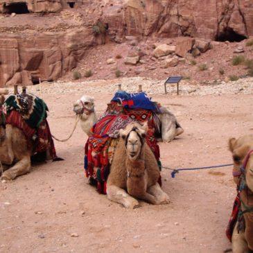 Petra, la città rosa